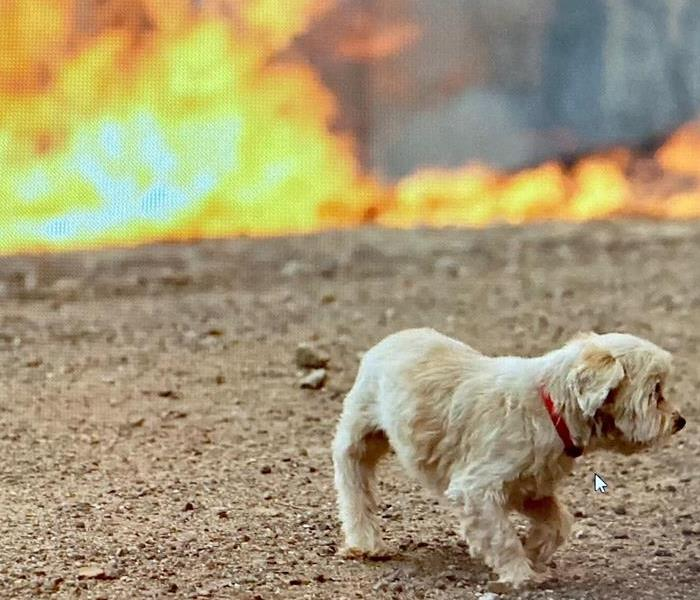 wildfire with dog in forefront